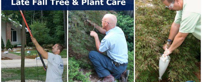 Late Fall Dormant Pruning - Fertilization